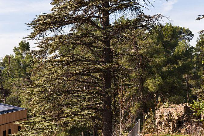 Im Hintergrund rechts der Fels, von wo aus Cézanne sein Lieblingsmotiv, den Sainte-Victoire, gemalen hat